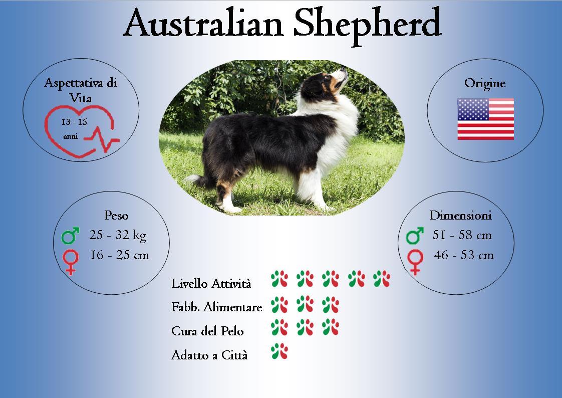 animoR Australian Shepherd Italia Infographic